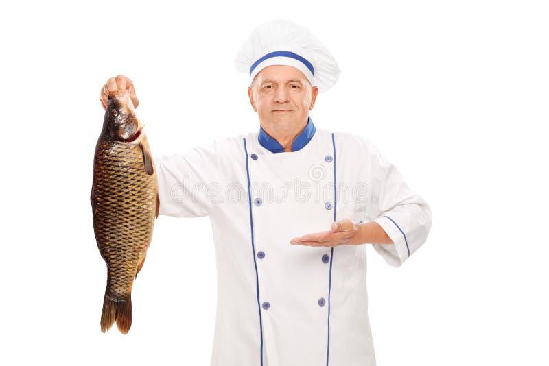 Cocinero maduro que sostiene un pescado de agua dulce grande imágenes de archivo libres de regalías
