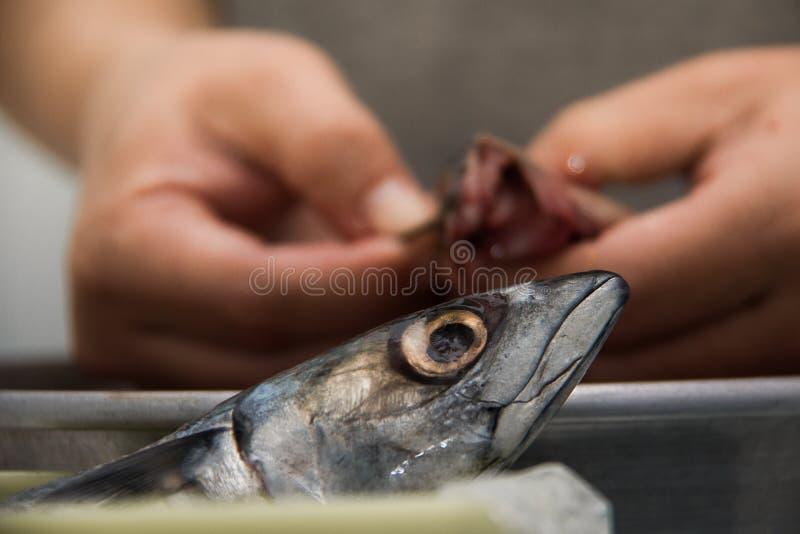 Cocinero que limpia un pescado imagen de archivo