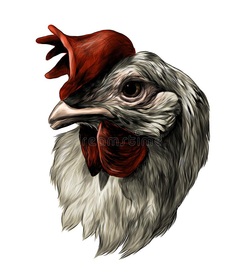 Free Cock Head Stock Photo - 154422810