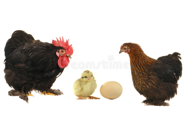 And  Hen Royalty Free Stock Photography