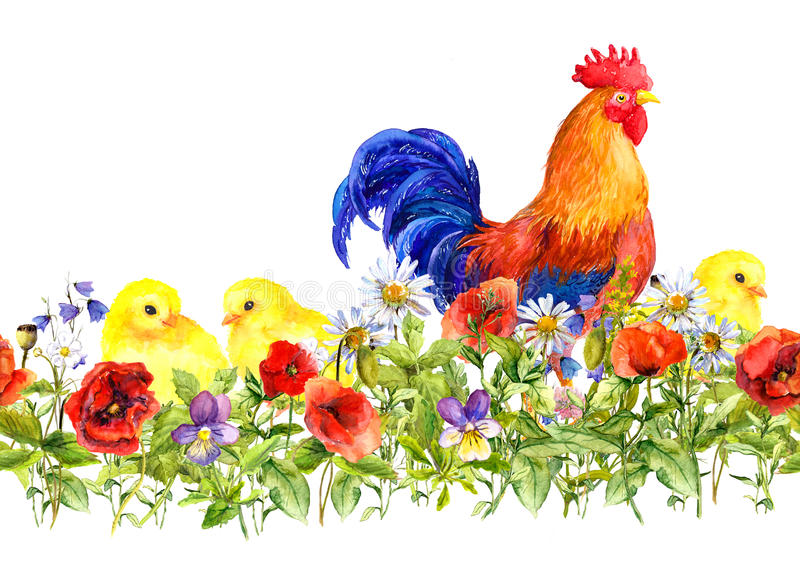 rooster and small chicks in grass, flowers. Seamless pattern. Watercolor royalty free illustration