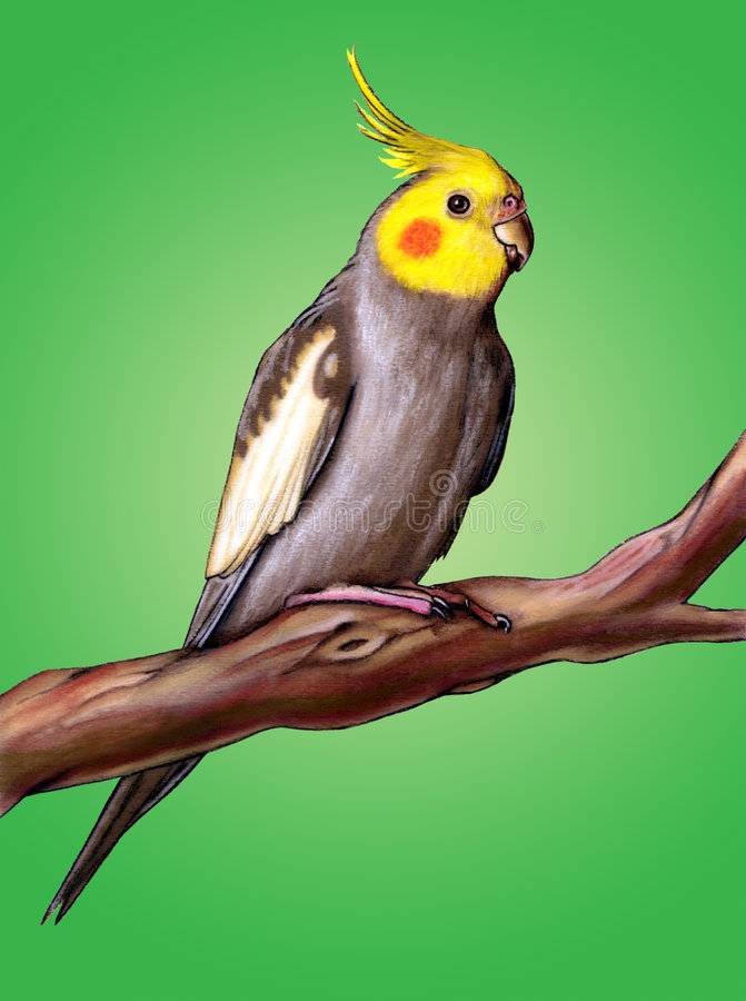 Cockatiel feliz ilustração royalty free