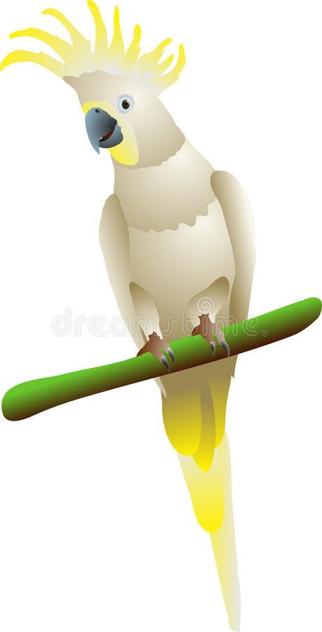 Download Cockatoo stock vector. Illustration of crested, sulphur - 4591077