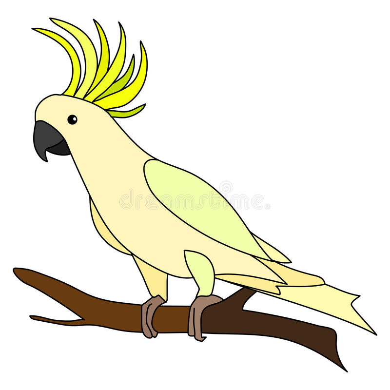 Cockatoo vector illustration