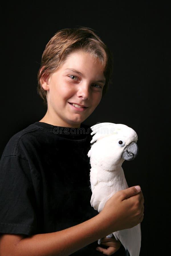 Cockatoo moluquois avec le garçon photographie stock libre de droits