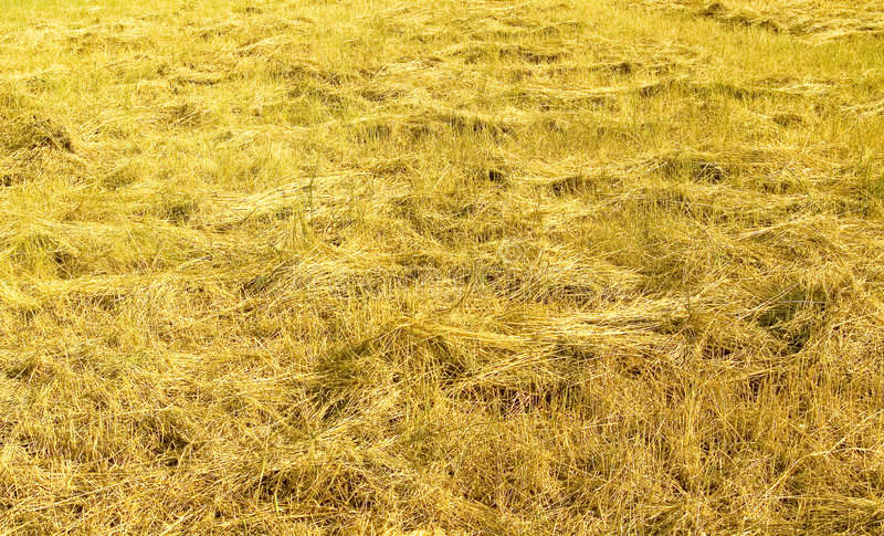 Download The Cocked hay. stock photo. Image of ecology, farmland - 2612864