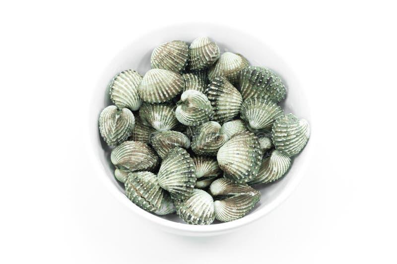 Cockle owoce morza na białym tle z grubsza zdjęcie stock