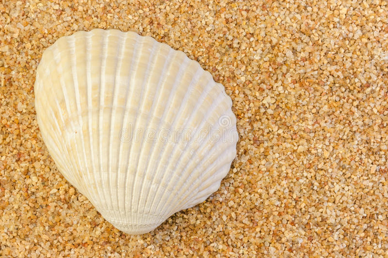 Cockle Shell on Coarse Sand. Closeup image of a cockle shell lying on a bed of coarse sand and revealing its natural patterns stock image