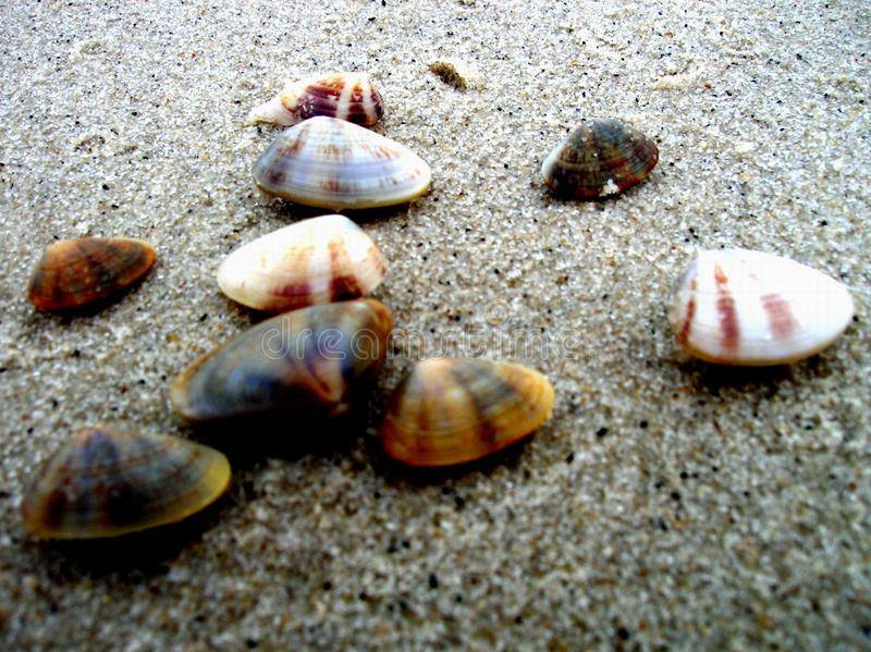 Cockle Shells On The Beach Free Stock Photos
