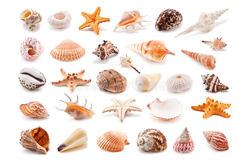 Cockleshell. Collection of cockleshell isolated on white stock image