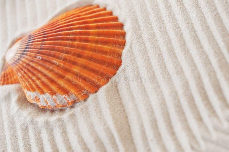 Cockleshell auf Meersand lizenzfreie stockfotografie
