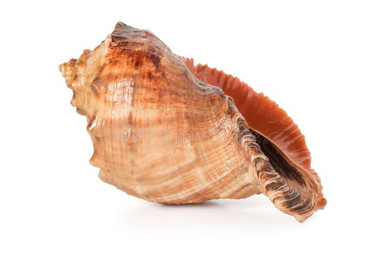 Cockleshell av Blacket Sea royaltyfri foto