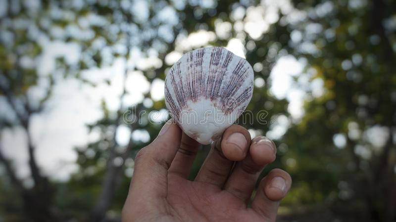 Cockleshell. Natural, blur, photography, sea royalty free stock image