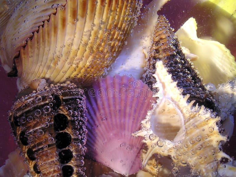 Cockleshell do mar sob a água foto de stock
