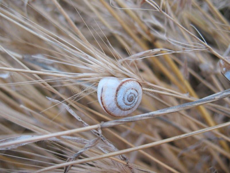 Cockleshell på ett gräs arkivfoto