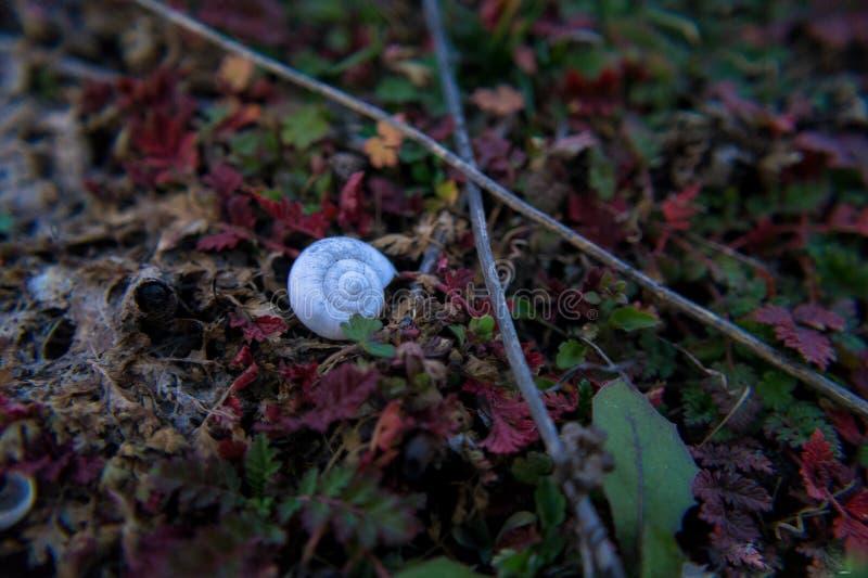 Cockleshell på gräs arkivfoto