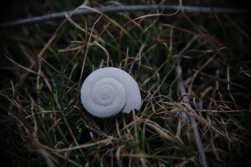 Cockleshell på gräs arkivfoton