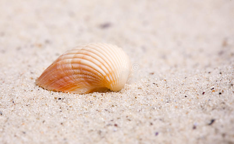 Cockleshell on a sand of beach. Close-up. Cockleshell on a sand of beach royalty free stock images