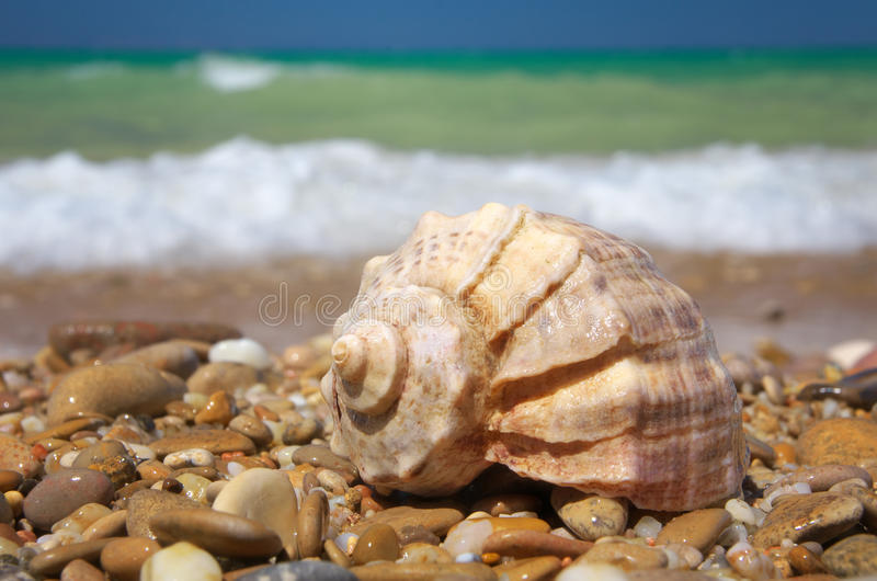 Cockleshell on the sea shore royalty free stock photos