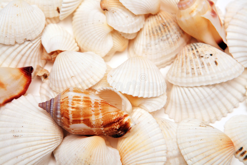 Cockleshells stockfotografie