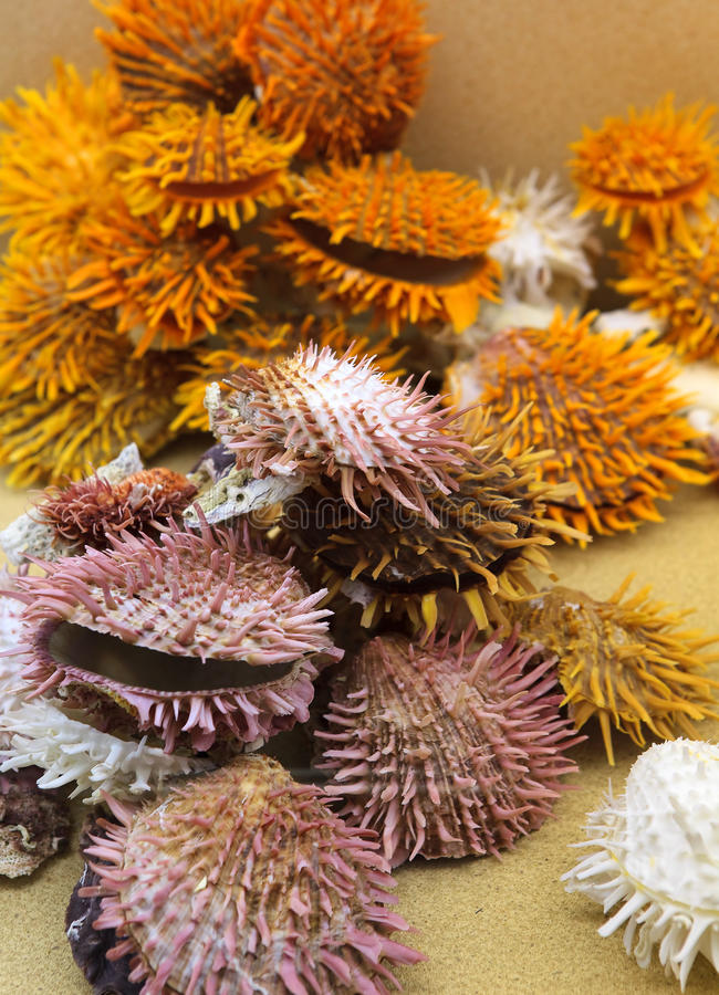 Download Cockleshells and corals stock photo. Image of scallop - 19434192