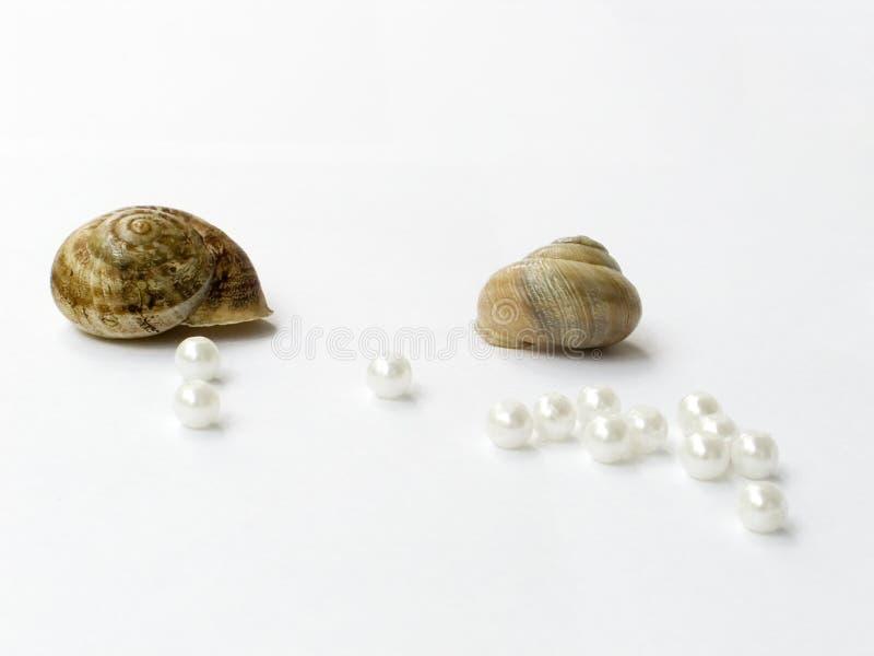 Cockleshells e perle fotografie stock libere da diritti