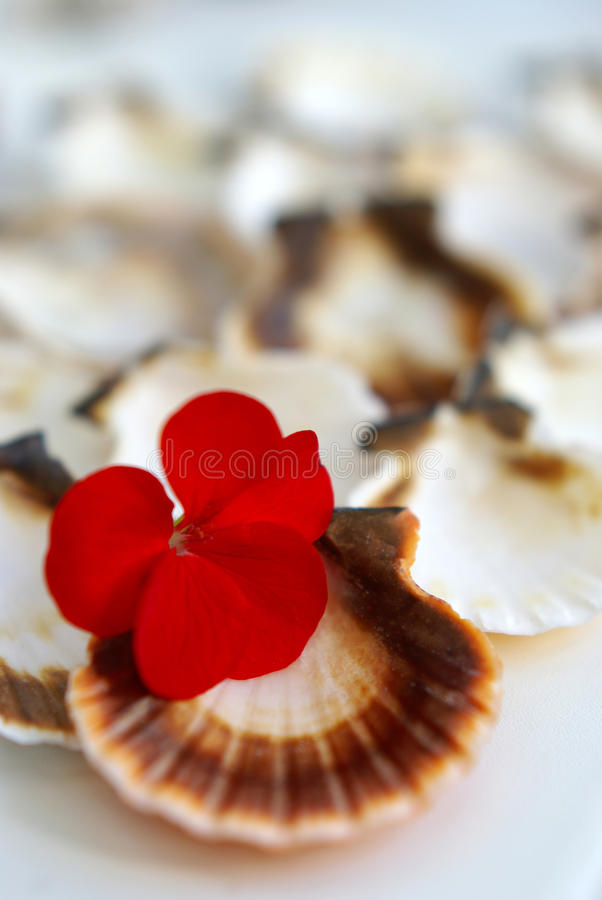 Cockleshells and a flower. Cockleshells and red flower a close up stock photos
