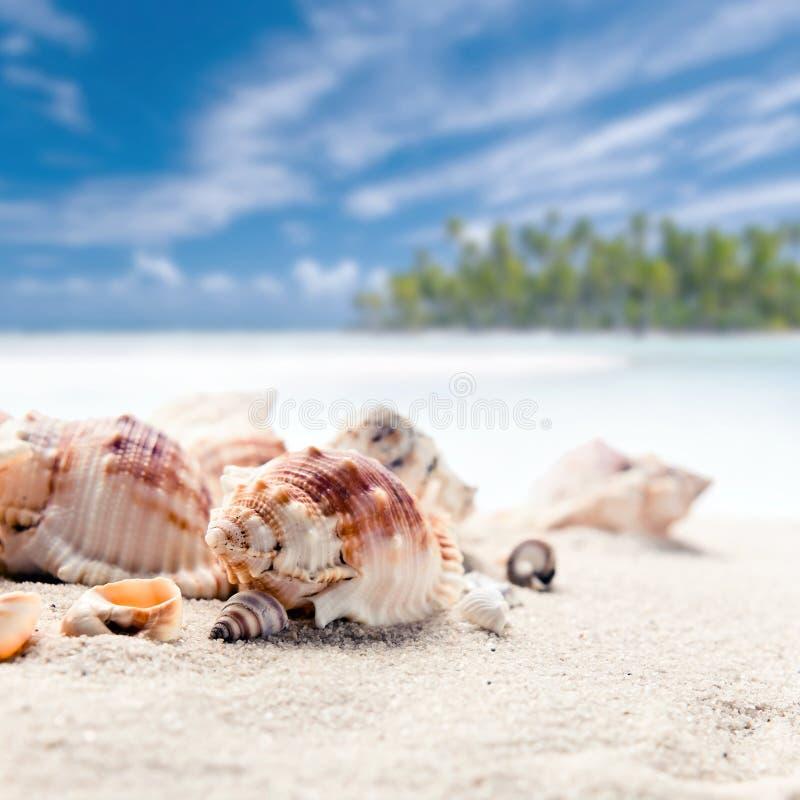 Cockleshells on sea sand royalty free stock image