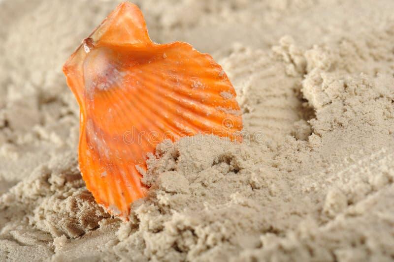 Cockleshells und Sand stockbild