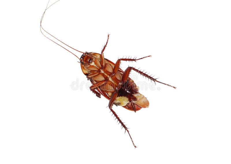 Download Cockroach stock photo. Image of black, beetle, effect - 13159904