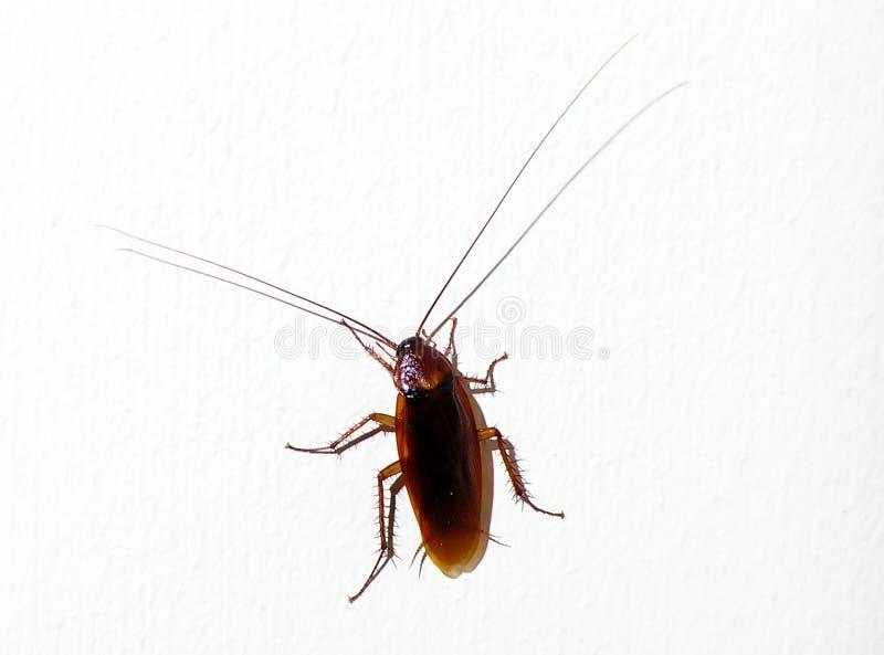 Download Cockroach stock photo. Image of irritating, disease, dark - 23092