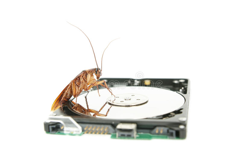 Cockroach climbing on hard disk drive stock image