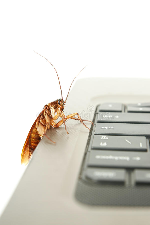 Cockroach climbing on keyboard. To present about computer attacked from virus stock image