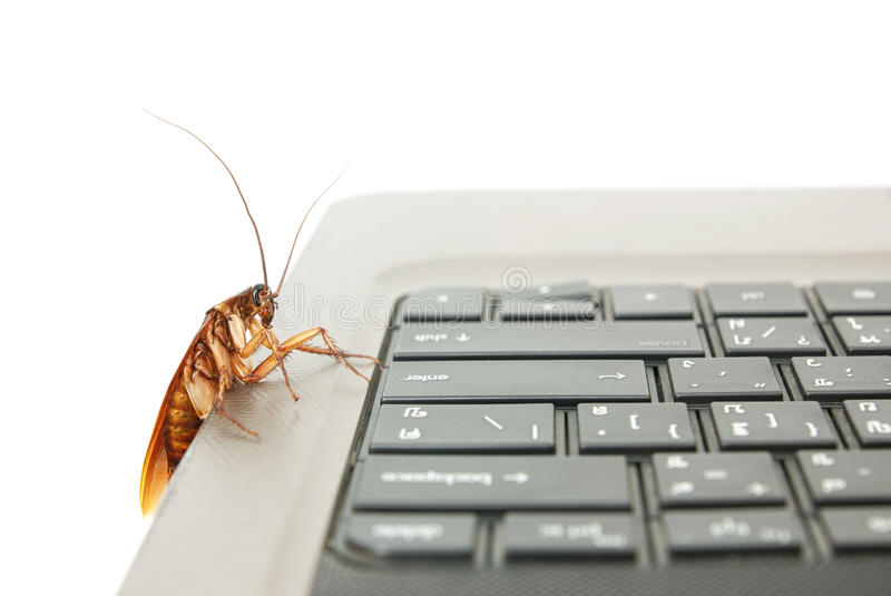 Cockroach Climbing On Keyboard Royalty Free Stock Photo