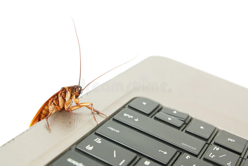 Cockroach climbing on keyboard. To present about computer attacked from virus royalty free stock photo