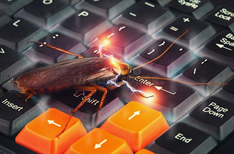 Cockroach climbing on keyboard to present about computer attacked from virus royalty free stock image