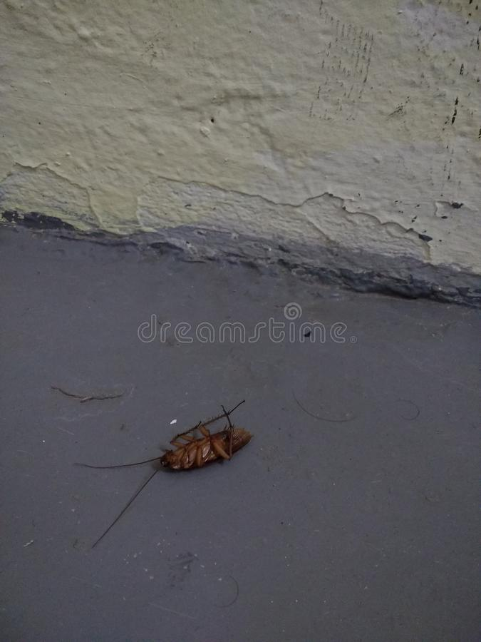 Insect Extermination, Dead Cockroach, Pest Control stock photo
