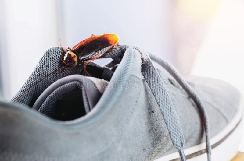Cockroach live on the shoes. selective focus stock images