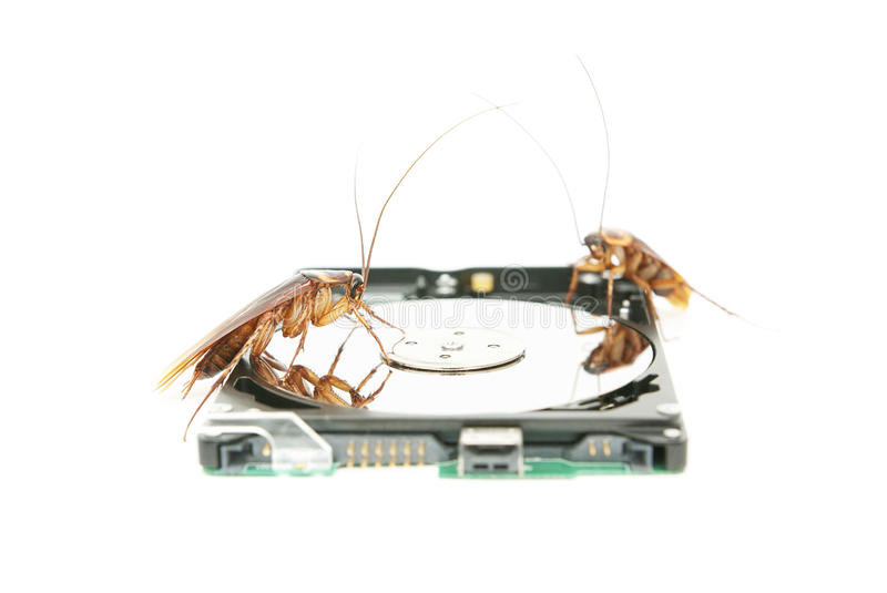 Cockroaches climbing on hard disk drive royalty free stock photos