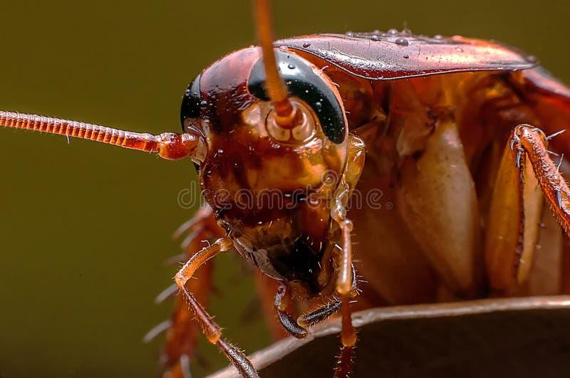 Cockroach macro stock photos