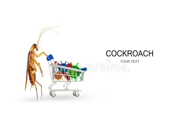 Cockroaches and trolley with various germs on a white background. Concept of home invasive pest control and cockroach protection. Cockroaches carry the disease royalty free stock image