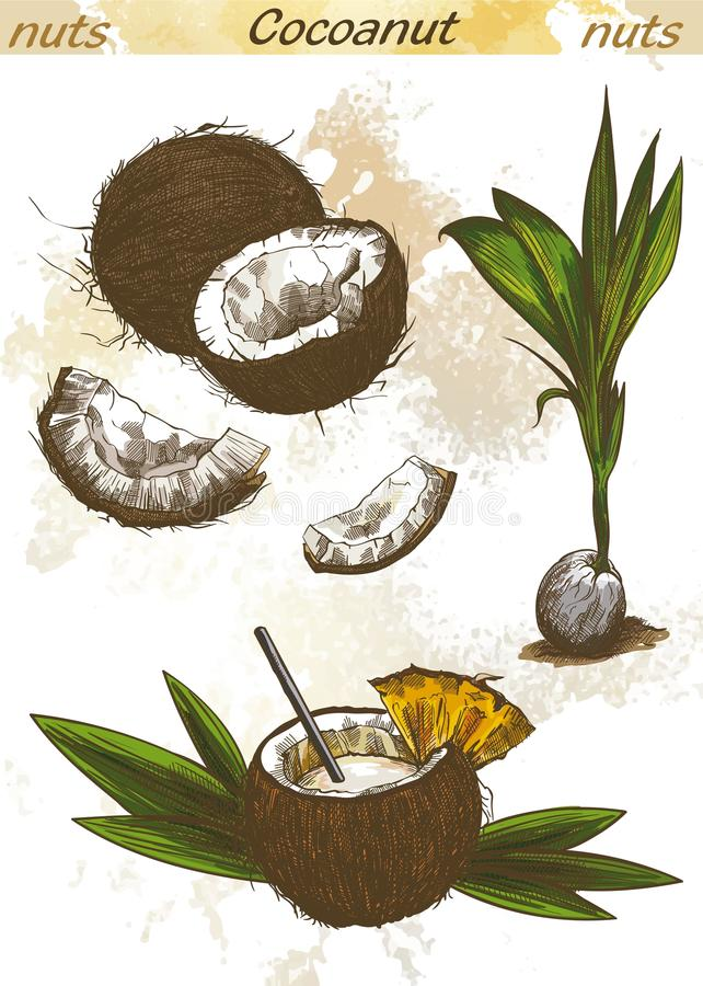 Cocktail of coconut milk. And half a coconut royalty free illustration
