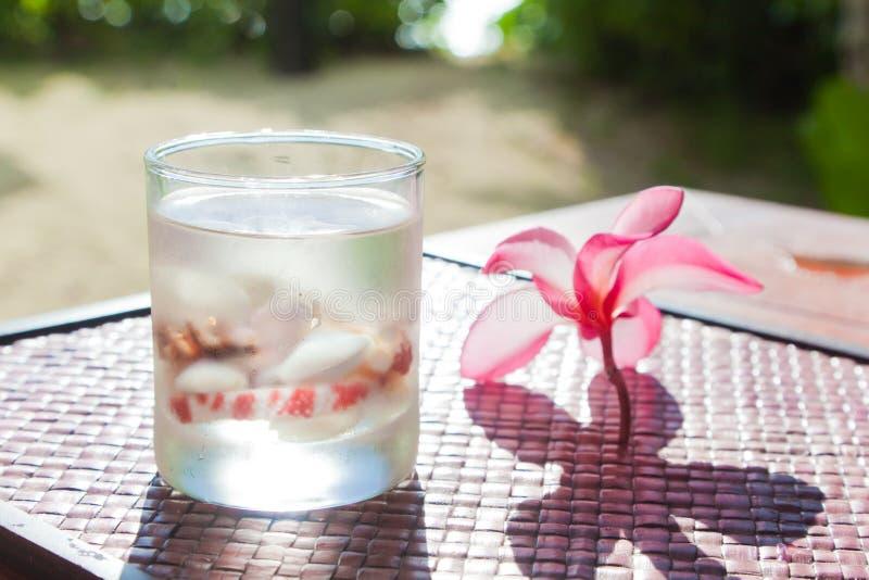 Cocktail tropical avec des coquilles photographie stock