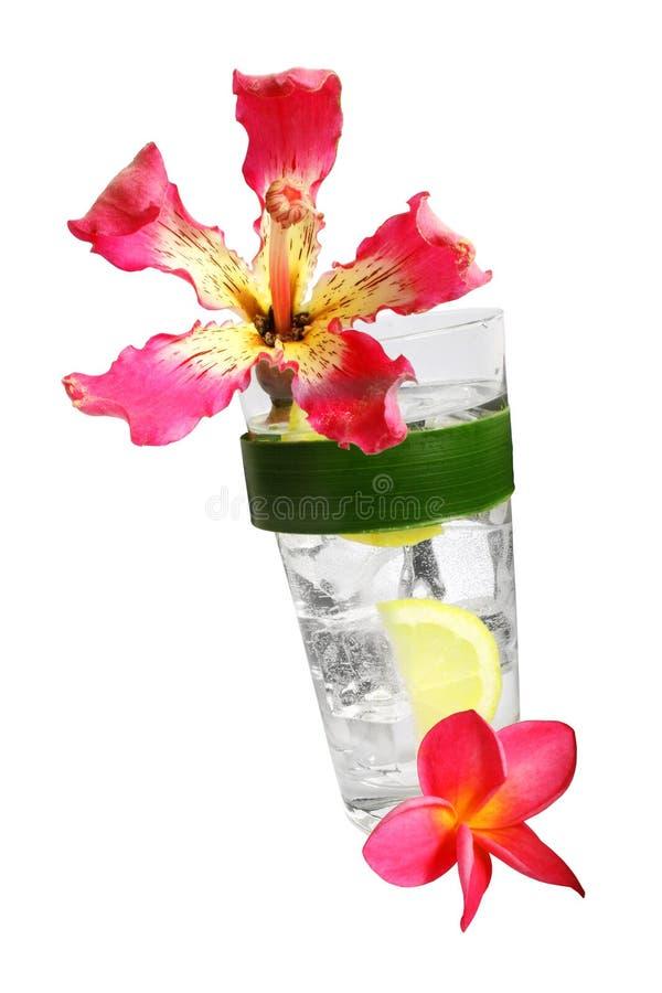 Cocktail tropicale fotografia stock