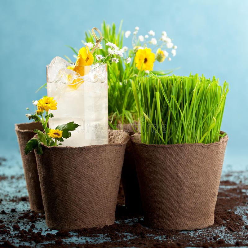 Cocktail. Vodka and Liquor Cocktail with Flowers Pots royalty free stock photo