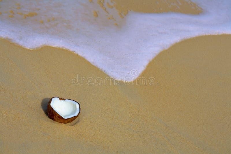 Coco imagem de stock