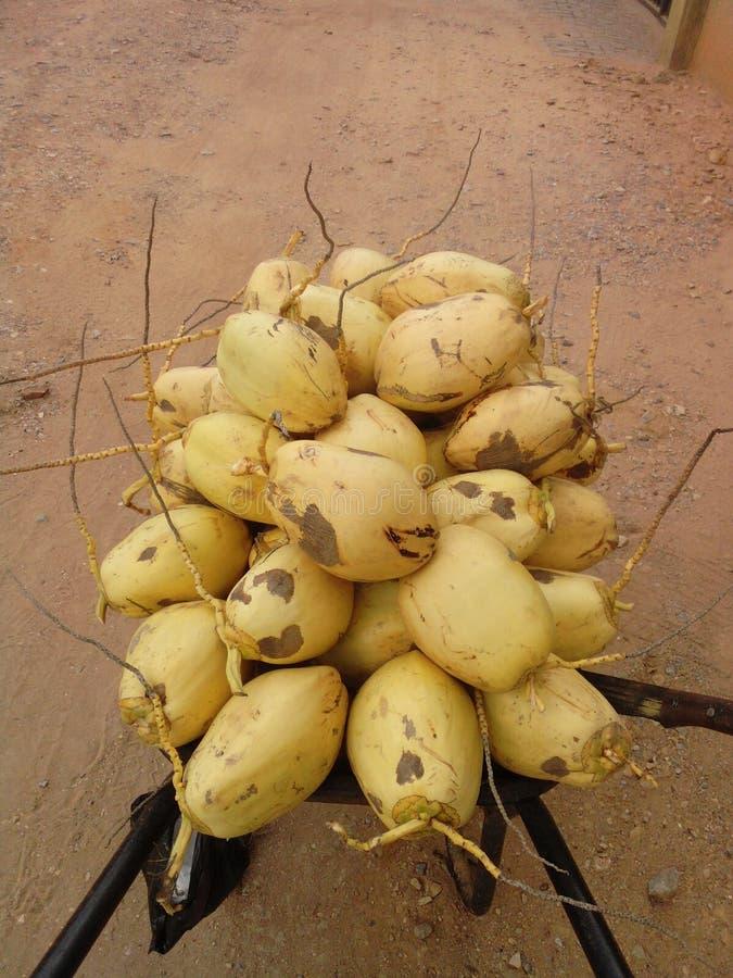 Coco amarillo imagen de archivo