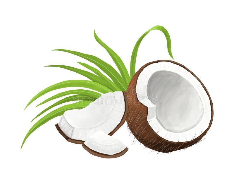 Coco com as folhas do verde isoladas no fundo branco ilustração stock
