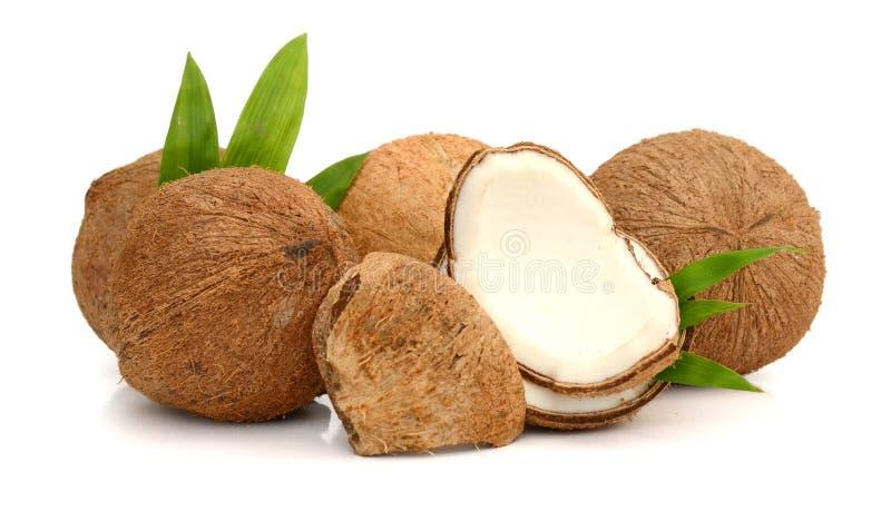 Coco con las hojas fotografía de archivo