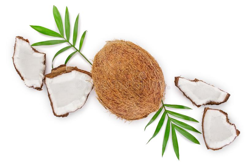 Coco con las hojas aisladas en el fondo blanco con el espacio de la copia para su texto Visi?n superior Endecha plana libre illustration